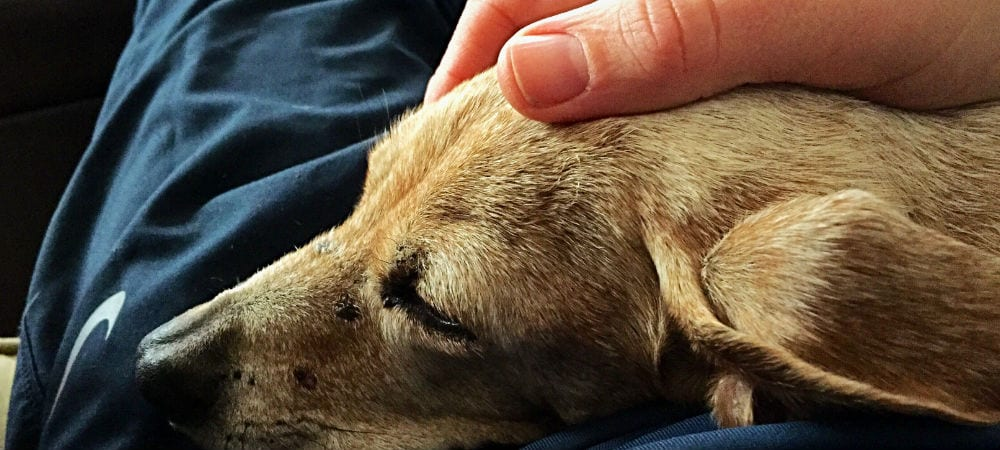 Saying Goodbye To Your Dog How Know