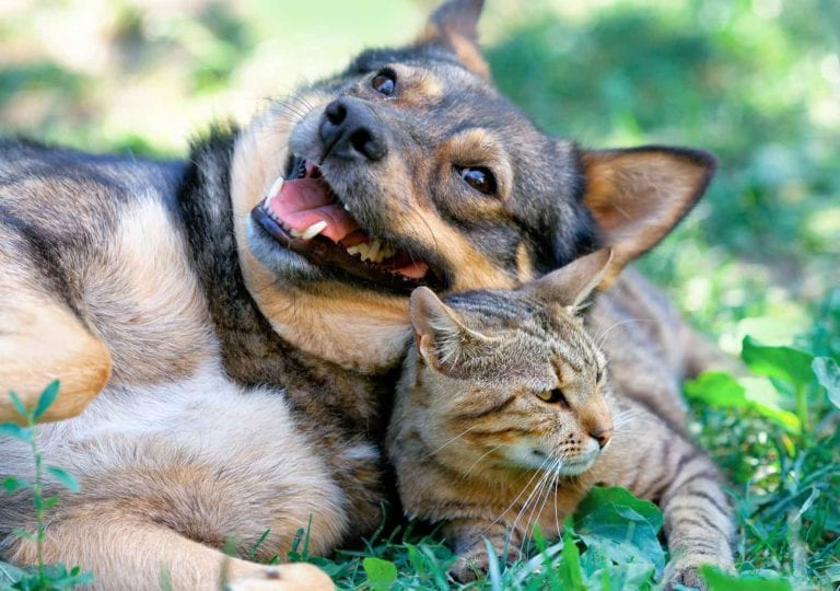 poison prevention for pets