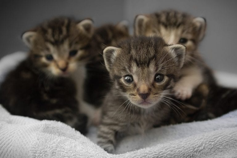 Everything You Need to Know About Kitten Season